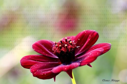 flower1 watermark