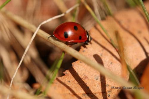 käfer watermark